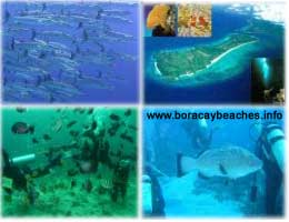 boracay diving, dive sites, snorkelling